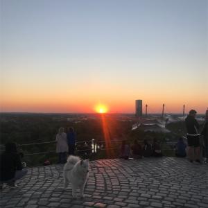 日の入りと犬