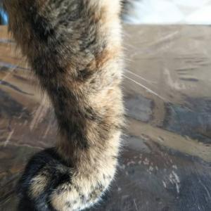 猫の足に生えてるヒゲについて調べてみた