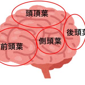 最も人間らしい脳 前頭前野