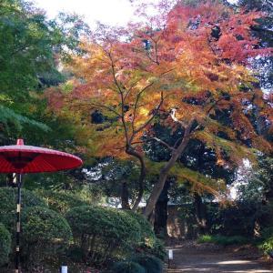 【六義園】都立庭園紅葉めぐりスタンプラリーその1