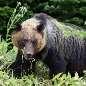 江別の熊 野幌森林公園付近から北広島にも【熊最新情報】
