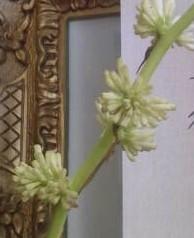 【ちょっと幸せな気持ちになれる…「お花」が咲きました!…】#145