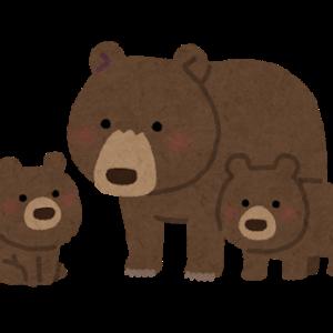 【街中で人が熊に襲われる?!…なぜ?…最近のクマ被害報告の多さ】#242