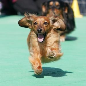 DOG DEPT御殿場店飛行犬撮影会 2-24-11
