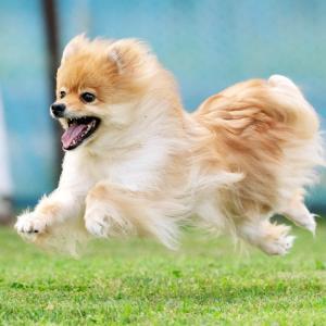 7-26-16 旭川市ローズドッグラン飛行犬撮影会