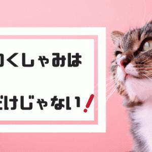 猫はなぜくしゃみをする?猫がくしゃみをする理由と病気の症状
