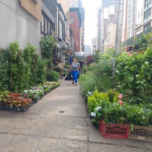 [D+22] マンハッタンの花屋通りとホールフーズマーケット♪