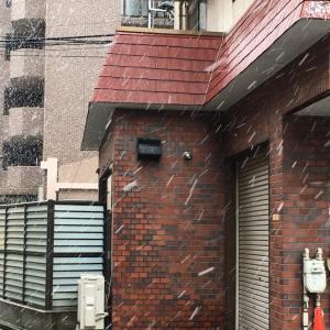 またまた雪〜。