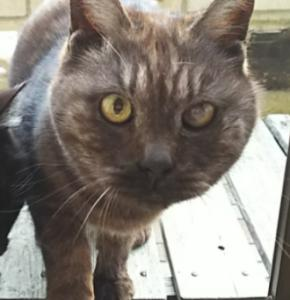 20歳。外猫のチマとお別れしてきました。