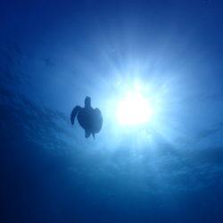 沖縄ダイビングポイントマップ