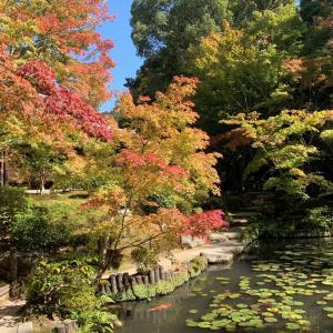 京都市民の京都観光 その1
