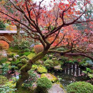 京都市民の京都観光 その3 の1
