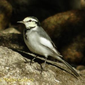 Photo 野鳥シリーズ5 ~多種多様な野鳥たち…~