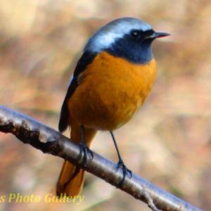 Photo 野鳥シリーズ70 ~山歩きで出逢った野鳥たち…~