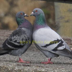 Photo 野鳥シリーズ99 ~山歩きで出逢った野鳥たち…~
