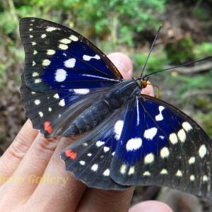 Photo 昆虫シリーズ10 ~山歩きで出逢った、いろんな昆虫たち…~