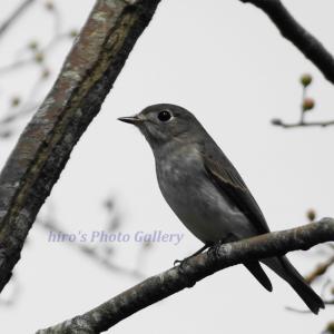 Photo 野鳥シリーズ179 ~秋の恵みに集う小鳥たち…~
