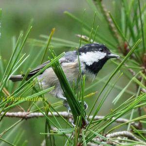 Photo 野鳥シリーズ180 ~トンボの池にやって来る、小鳥たち…~