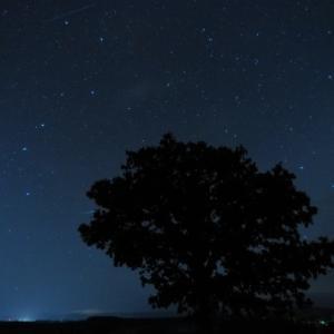 ペルセウス座流星群を見よう!2020