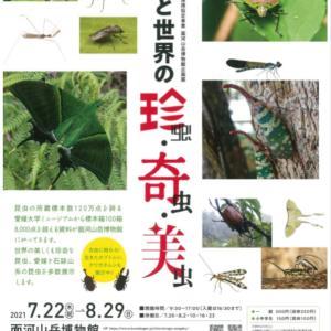 【 面河山岳博物館 】 企画展「愛媛と世界の珍虫・奇虫・美虫」開催のお知らせ