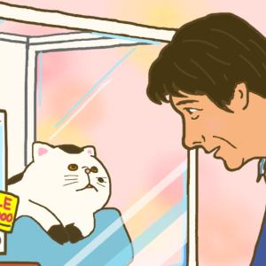 この冬おすすめの湯たんぽ系ドラマ『おじさまと猫』&【お知らせ】