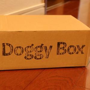 犬の「おやつ」と「オモチャ」もサブスクでU^ェ^U♪アレルギーのあるワンコも安心!