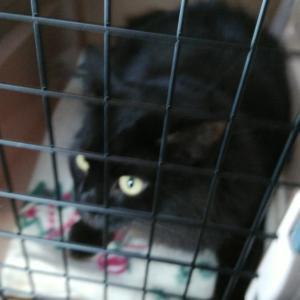 コロナ(愛猫です)、健康診断へ