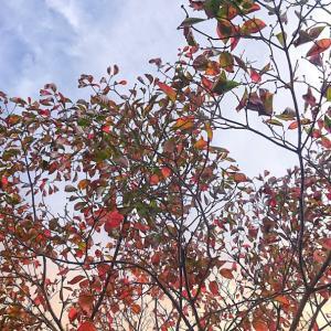 花水木の秋