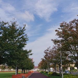 久しぶりのお昼の散歩