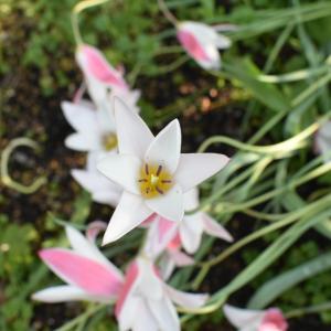 春の庭の植物たち。