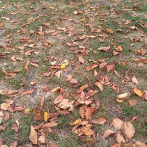 無数の枯れ葉