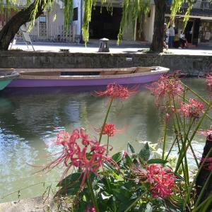 曼珠沙華が咲き、柳が揺れる柳川へ行ってきました。