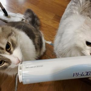 """猫毛掃除の強い味方""""コロコロ""""でおすすめ商品見つけました!"""