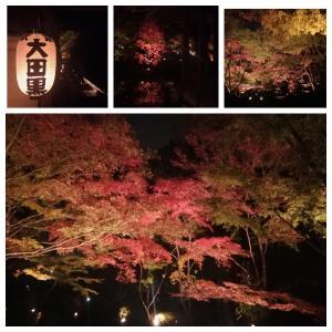 大田黒公園の紅葉と教室アクセス案内