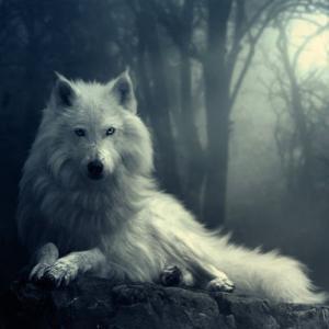 自分がわからない人狼