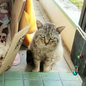 🐱 野良猫ぬしの日常②・よもぎのミニチュアフード☘️✨