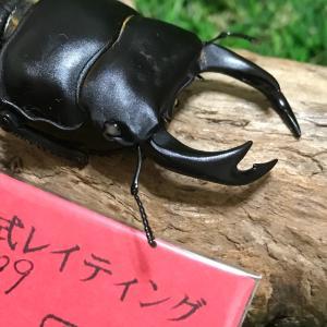 ☆ 2019-2020 元木ホワイトアイ オオクワガタ ♂羽化確認ネタ(^^) ☆
