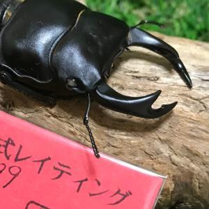 ☆ 2020-2021 元木ホワイトアイ オオクワ ♂327系統 幼虫引越し(^^) ☆