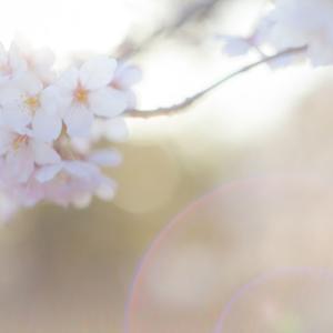 【中学受験2019】4大手塾 SAPIX・日能研・早稲田アカデミー・四谷大塚【合格実績】