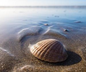 貝殻で海を量る