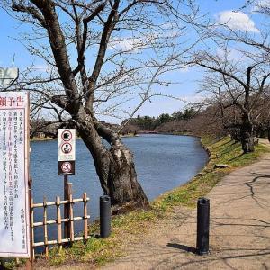 今日の弘前公園