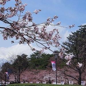 弘前公園桜の開花発表
