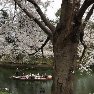 満開の弘前公園