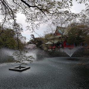 2019年年度末の井の頭公園の桜・弁財天