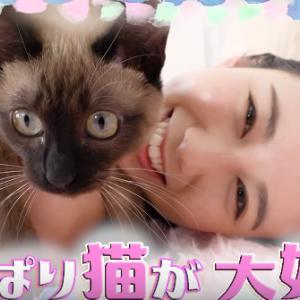 ネコ大好き森川アナと、オンラインサロン、動画配信、NHK、このショックにテレビ局はどうする?