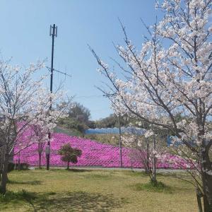 道の駅で春を満喫~  愛彩(あいさい)ランド