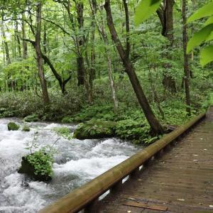 奥入瀬(おいらせ)渓流 一眼レフで撮影散策 💗