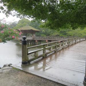 奈良公園  浮御堂 →→ 興福寺 ぶらぶら散策🌂