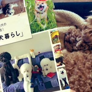 犬との暮らしを楽しんでいるインスタグラマー【まとめ】ヒントやアイディアがいっぱい!
