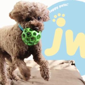 丈夫で安全!持ってこいの遊びにもおすすめの犬用おもちゃ!ホーリーローラーボール